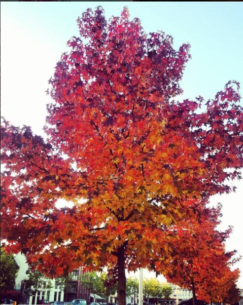 yvette-herfst